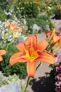 A Beginner U0026 39 S Guide To Choosing Flower Bulbs
