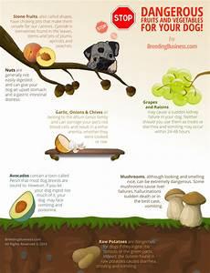 best dog food nutrition infographics