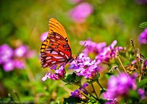 Garden Flowers That Attract Butterflies