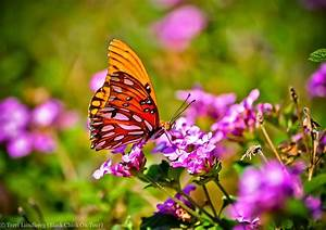 Plants to attract butterflies to your backyard for Butterflies and plants