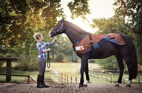 bemer veterinary  healthy home coach