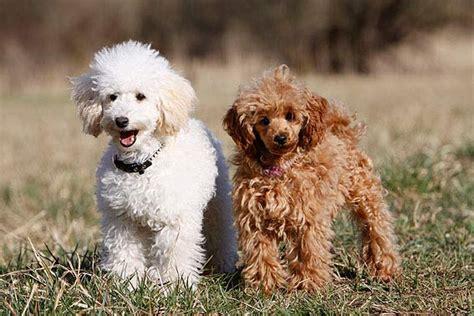 Pflanzen Die Hunde Nicht Mö by Hunde Die Nicht Haaren Unsere Tipps Die Tierexperten