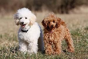 Bodenbelag Für Hunde Geeignet : hunde f r allergiker darauf sollten sie achten ~ Lizthompson.info Haus und Dekorationen
