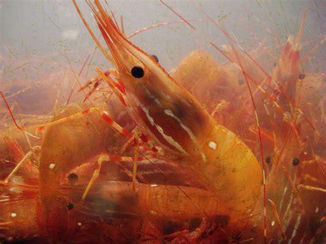 ocean star seafood hometown pasadena