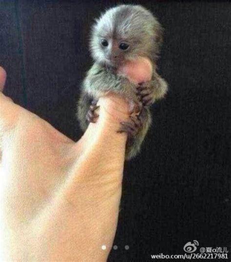 omg thumbs monkey tooo cute | Bichinhos fofos, Animais ...