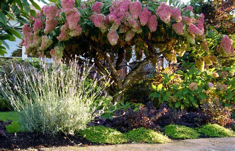 When To Prune Hydrangeas — The White Pear