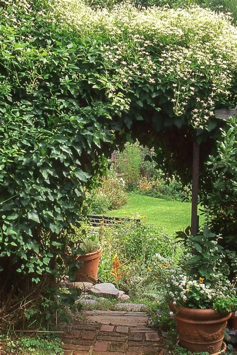 Kletterpflanzen Mit Blüten by Kletterpflanzen Schnellwachsende Und Bl 252 Hende Reben F 252 R