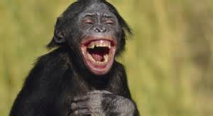 Do animals laugh  - HowStuffWorks  Laughing