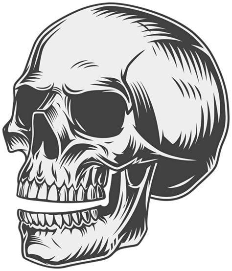 skull png clipart gallery yopriceville high quality