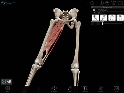 Adduction Hip Muscle Muscles Kinesiology Terminology Visual