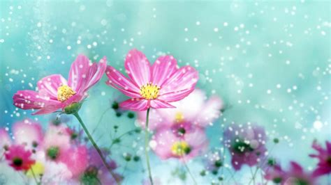 Wallpaper Of Hd Flower by Wallpapers Flowers Hd Live 4k Wallpapers