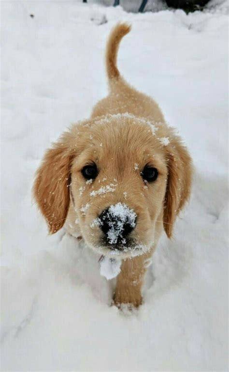 snow pup cute baby animals cute dogs cute animals