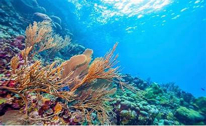 Ocean Acidification Cost Could Billions Thehill Change