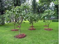 small trees for landscaping Small Landscaping Trees | Newsonair.org