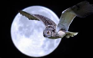 how the moon affects birds 39 rhythms temporal patterns and