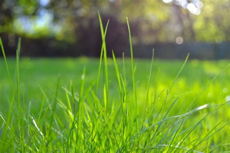 Tips For Keeping A Healthy Summer Lawn