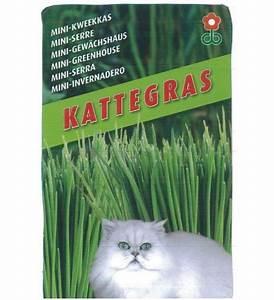 Graine Herbe A Chat : mini serre de culture d 39 herbe chat graines bocquet ~ Melissatoandfro.com Idées de Décoration