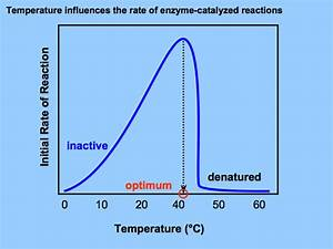 Reflection On Enzyme Part 2