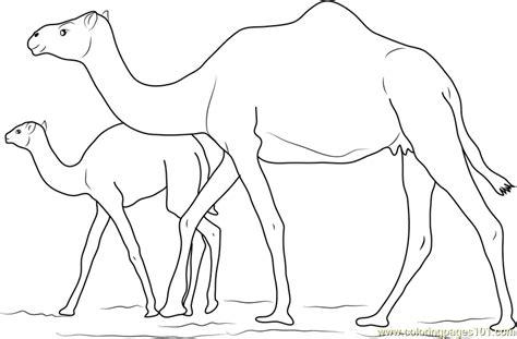 Baby Camel With Her Mother Coloring Page Free