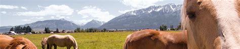 pferdeversicherung ein pferd ist nicht berechenbar das