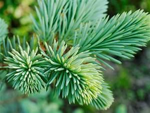 Life In The Taiga : taiga plants names ~ Frokenaadalensverden.com Haus und Dekorationen