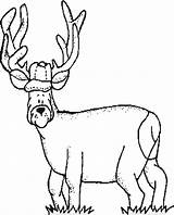 Coloring Deer Hunting Pages Printable Woods Hunter Library Clipart Colouring Popular Coloringhome Template sketch template