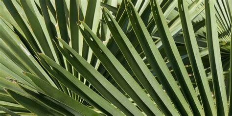 Blayson supply Carnauba Wax to Many Industries