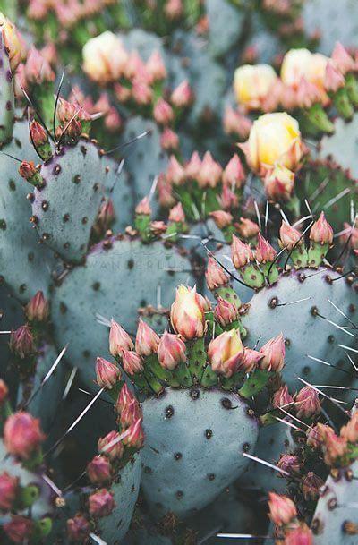 cactus photography bohemian print southwest cactus