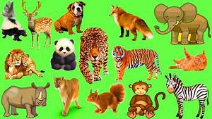 Forest Animals Photos With Names   Wallpaper sportstle