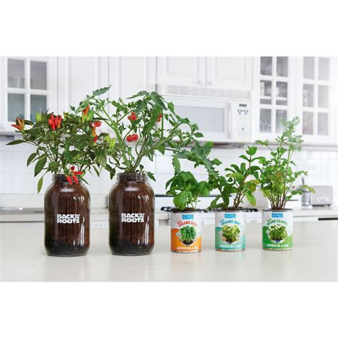 Windowsill Vegetable Garden by Back To The Roots Complete Herbs And Veggies Windowsill