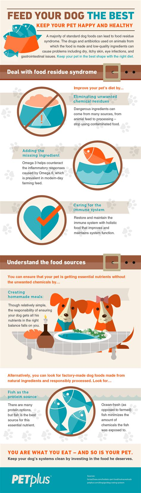 feed  dog   infographic