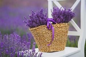 Plant De Lavande : lavender flower meaning flower meaning ~ Nature-et-papiers.com Idées de Décoration