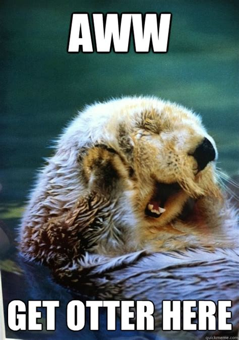 Awwww Meme - aww get otter here flattered otter quickmeme