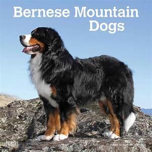 bernese mountain dogs calendar 2021 at calendar club