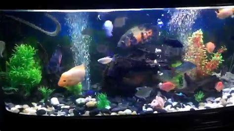 mix monster fish aquarium youtube