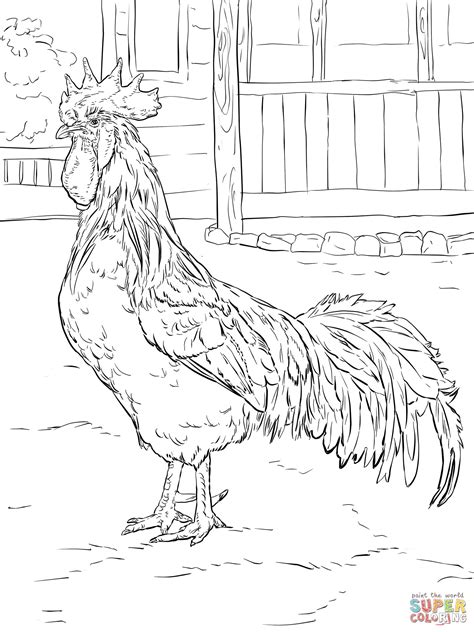 Brown Leghorn Rooster coloring page | Chicken coloring