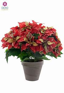 Kunstblumen Orchideen Topf : weihnachtsstern kunstblumen im topf mit goldglitter 44 cm x15 ~ Whattoseeinmadrid.com Haus und Dekorationen
