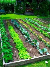 vegetable garden plans Best 25+ Vegetable garden layouts ideas on Pinterest | Garden planting layout, How to small ...