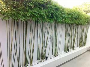 Bambou Brise Vue : plantes de jardin le bambou fascinant et polyvalent ~ Premium-room.com Idées de Décoration