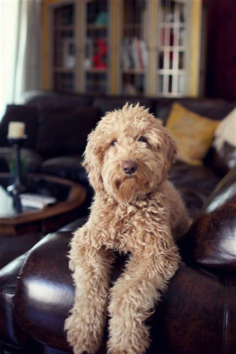 cute small dog breeds that don t shed dog breeds