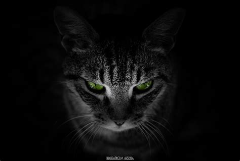 cat animals black background green eyes wallpapers hd