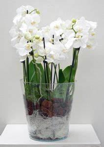 Orchideen Im Glas : die besten 25 orchideen im glas ideen auf pinterest ~ A.2002-acura-tl-radio.info Haus und Dekorationen