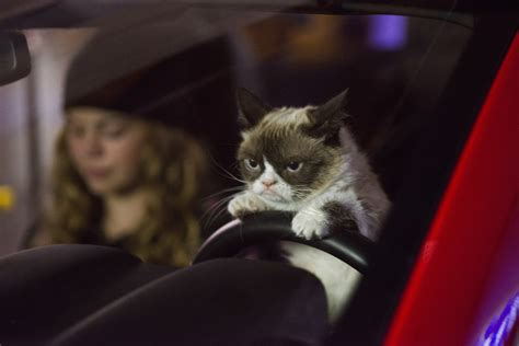 'grumpy Cat's Worst Christmas Ever' Is Every Bit As Awful