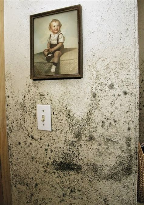 Removing Mold From Painted Walls Remove All Stains How To Remove Mold Stains From Walls