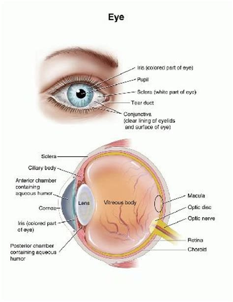 what part of the eye has color pictures info autoimmune uveitis