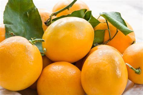 meyer lemon preserved meyer lemons pratesi living