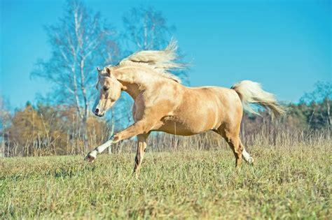 Pferd Muskelaufbau Futter