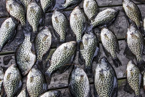 crappie winter jigging go spoons fall deep fishing summer they fish lures crappies shift move september during tips gameandfishmag