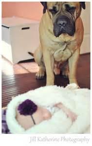 Dog Watching Over Sleeping Babies