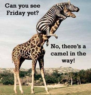 Giraffe Spider Meme - can you see friday yet wednesday pinterest